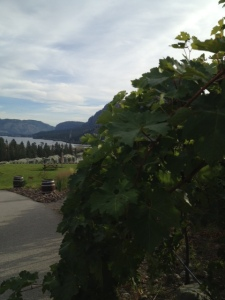 Vines and View at Noble Ridge