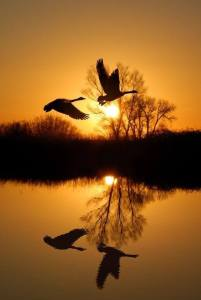 The wild geese do not intend to cast their reflection. The water has no mind to receive their image. ~Zenrin Tao & Zen https://zenflash.wordpress.com/2015/02/10/water-has-no-mind/